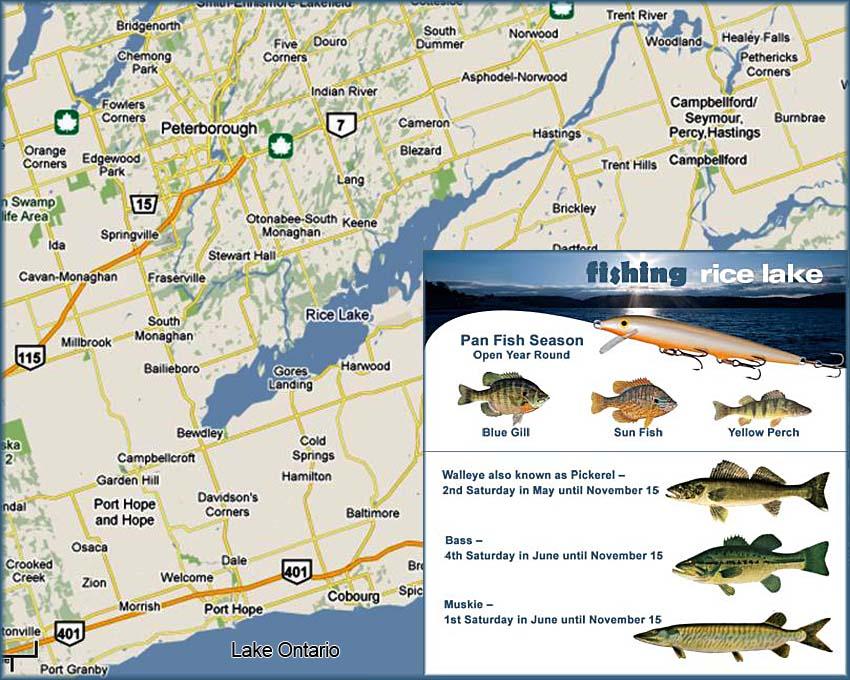 Fishing Rice Lake Serenity Estate Executive Cottage Rental - Ontario fishing lakes maps